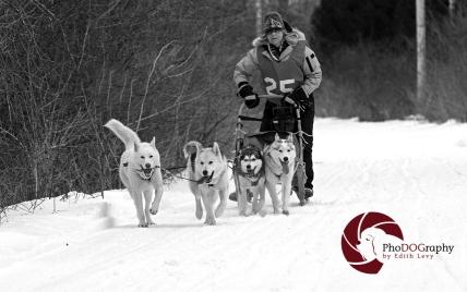 Cannington Dog Sled Races, Ontario, snow dogs, siberian husky, dogs, races, Toronto Pet Photographer, pet photography