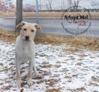 toronto Animal Services West Region, dog, shelter, rescue, adoption, HeARTs Speak, Toronto Pet Photographer Pet Photographer, Collie Sheppard