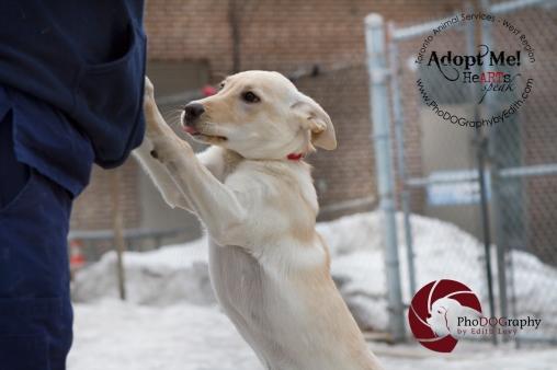 toronto Animal Services West Region, dog, shelter, rescue, adoption, HeARTs Speak, Toronto Pet Photographer