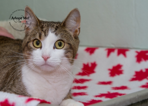 Toronto Animal Services, West Region, rescue, shelter, cat