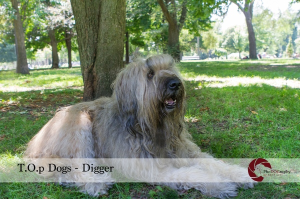 Dog, Briard, French, Top Dogs, Toronto Pet Photographer, Pet Photography, Trinity Bellwoods Park, Toronto Dogs
